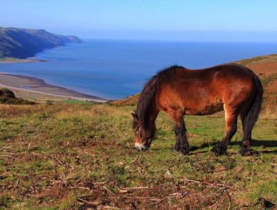 Exmoor Ponies and view over Exmoor
